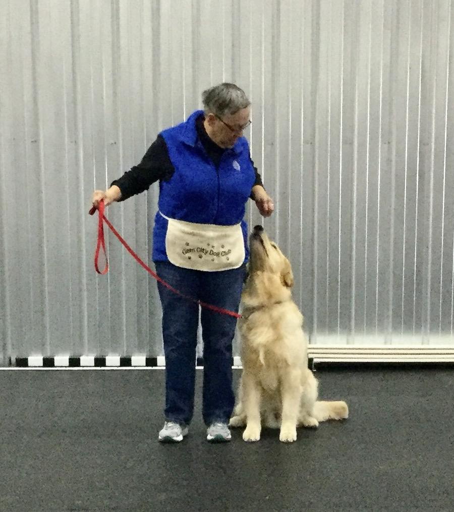 Gem City Dog Training