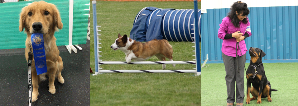 Gem City Dog Obedience Club – Gem City Dog Obedience Club